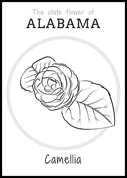Free Alabama State Flower Coloring Page | Camellia Flower